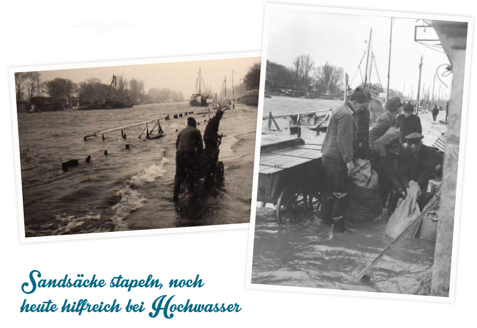 Seehund Warnemünde historische Aufnahmen
