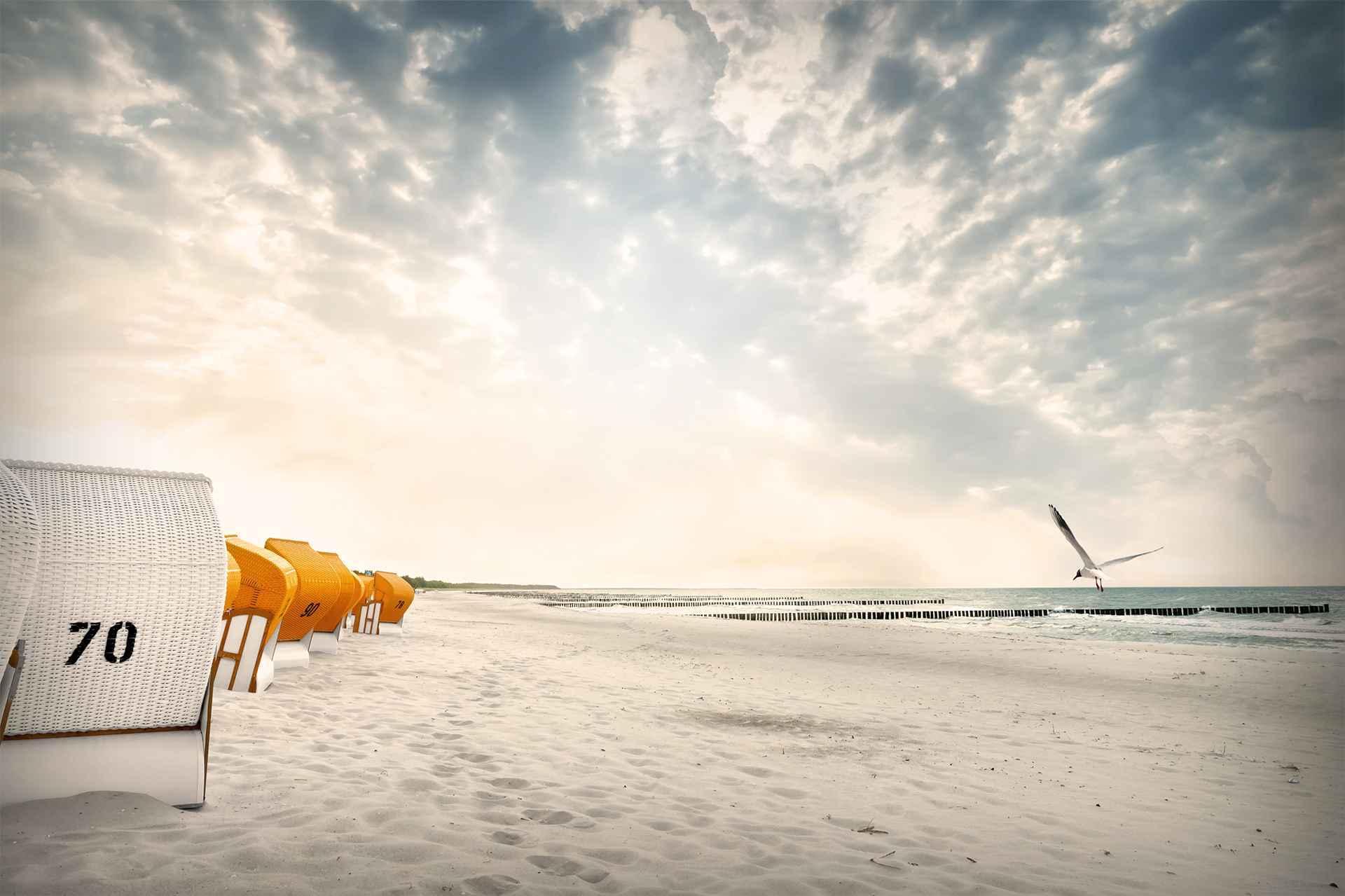 Seehund Warnemünde Strand