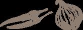 Seehund Warnemünde